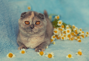 Cute little kitten with flowers