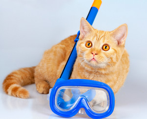 Cute red cat lying with snorkel and mask for diving