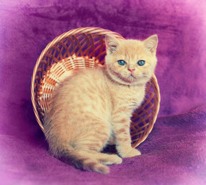 Cute red kitten sitting in a basket