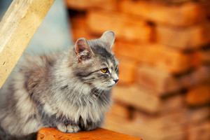 Cute siberian cat sitting near the pile of bricks
