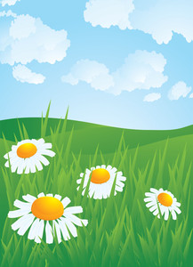 Daisyes In Meadow. Vector.