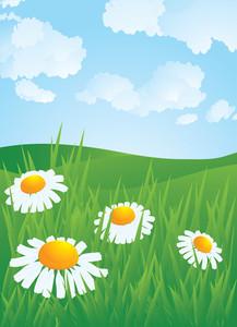Daisyes In Meadow. Vector.