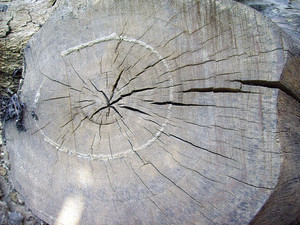 Damage_wood