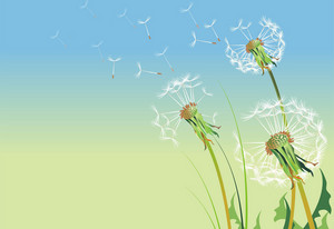 Dandelions Illustration