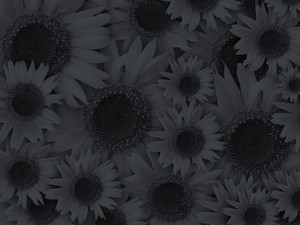 Dark Black Flower Background