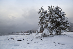 Snowy trees and a village on the edge of a foggy lake