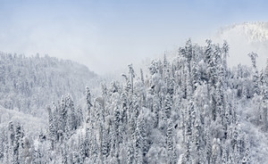 Snowy, forested mountain cliffs in dense fog