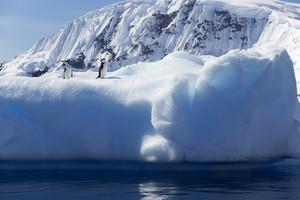 Pair of penguins on a sunlit iceberg