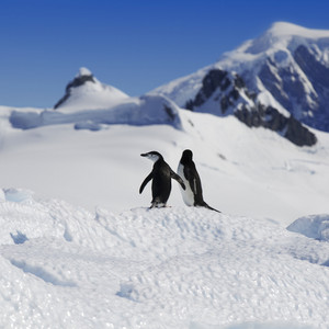 Close up of a pair of penguins on a sunlit iceberg