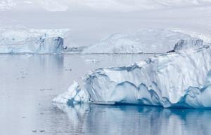Sunlit icebergs along a snowy coast