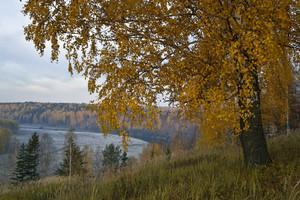 Trees and farmland along a riverbank