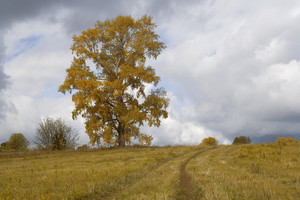 Golden trees and tracks through farmland in autumn