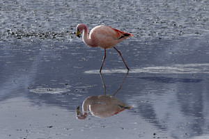Close up of a flamingo in sunlit water