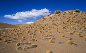 Desert vegetation and snowy rocks under a blue sky