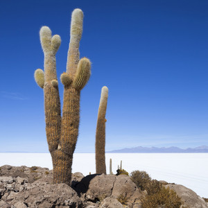 Cacti growing before a vast desert