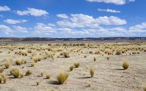 Dry vegetation and rocks in a vast flatland