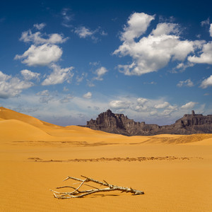 Dry, sun-bleached branch in the desert with rocky cliffs in the distance