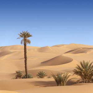 Sparse vegetation growing in a sandy desert