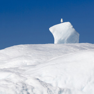 White bird perched on an iceberg against a blue sky