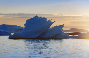 Bird perched on an iceberg at sunset
