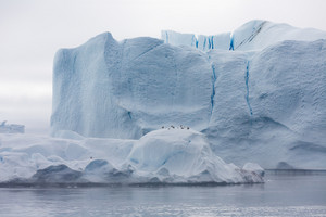 Flock of birds perched on a towering iceberg under a grey sky