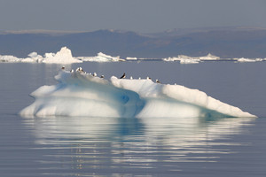 Flock of birds perched on an ice floe along the coast