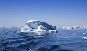 Vogel thront auf einem sonnigen Eisberg in der Dämmerung