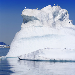 Birds perched on a sunlit iceberg at dawn