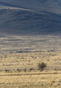 Trees and vegetation before a steep hillside