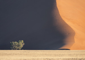 Trees growing along a sand dune