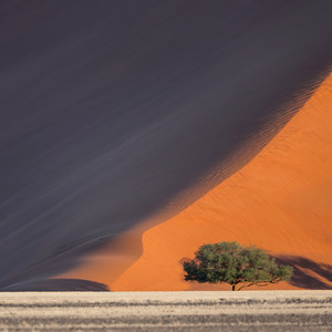 Tree growing along a sand dune