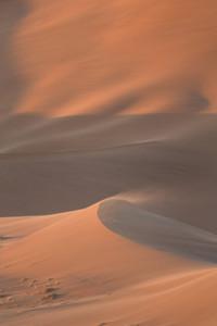 Scrub grass growing on a sunlit sand dune