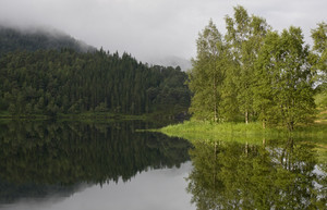 Forests reflected in a calm lake