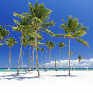 Palm trees on a white sand beach resort