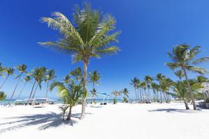 在白色的沙灘度假勝地棕櫚樹