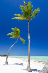 Palm trees on a white sand beach