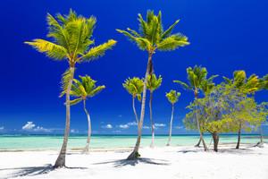 Palm trees along a tropical beach
