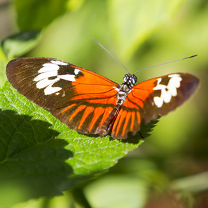 Colorful butterfly perched on a leaf