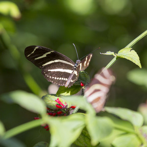 Striped butterfly perched on a leaf