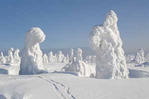 Trees buried under heavy snowfall at dawn