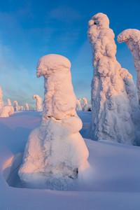 Árvores enterrados sob forte nevasca no por do sol