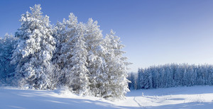 Trees buried under heavy snowfall under a blue sky