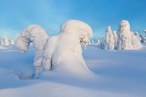 Trees buried under heavy snowfall under a blue sky