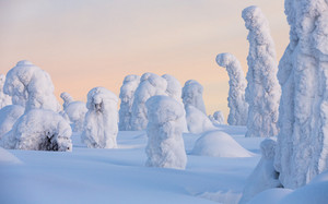 Trees buried under heavy snowfall at sunrise