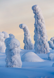 Trees buried under heavy snowfall at sunrise