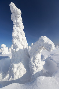 Trees buried under heavy snowfall