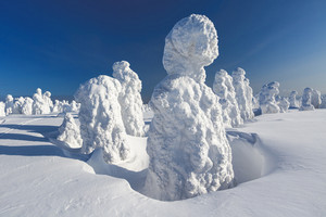 Trees buried under heavy snowfall