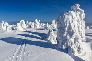 Ski trail past trees buried under heavy snowfall