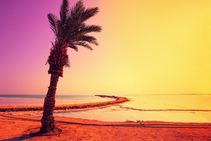 Dead Sea shore with palm trees at magic sunrise