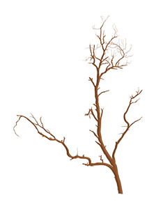 Dead Tree Vector Shape